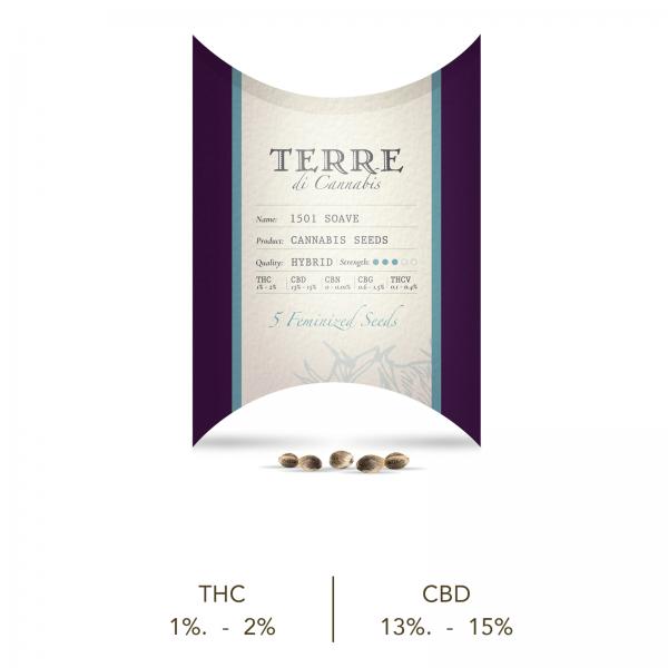 Semillas de Cannabis Soave CBD Terre di Cannabis