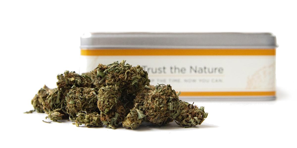 Las-mejores-flores-de-CBD-Cannabis-Light-Marihuana-legal