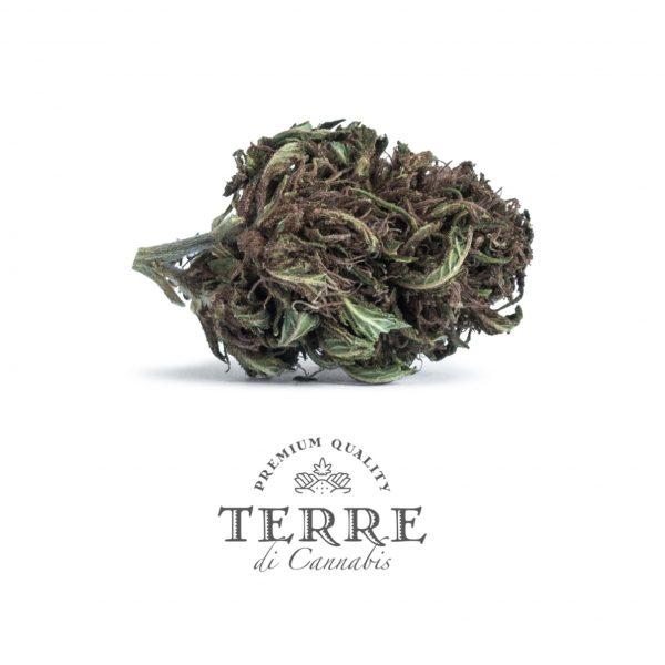 Flores de CBD Cannabis light Stella Purple Haze CBD Cannabidiol